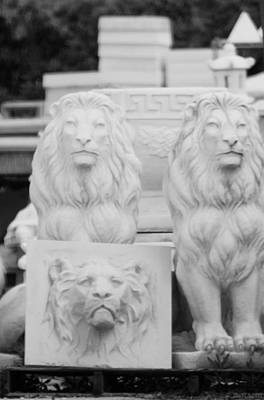Photograph - 3 Lions by Rob Hans