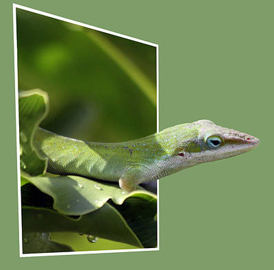 Photograph - Lizard by Jeanne Andrews