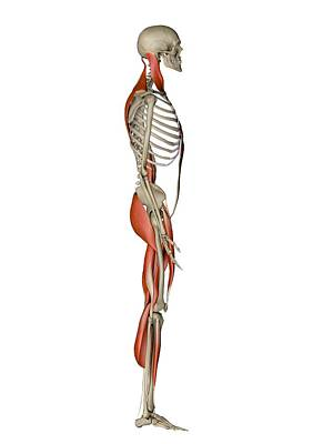 Male Muscles, Artwork Art Print by Pasieka
