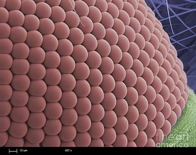Mosquitos Eye Art Print by Ted Kinsman