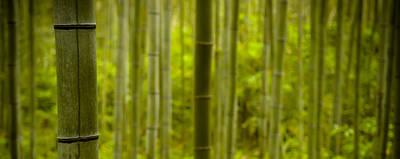 Mystical Bamboo Art Print by Sebastian Musial