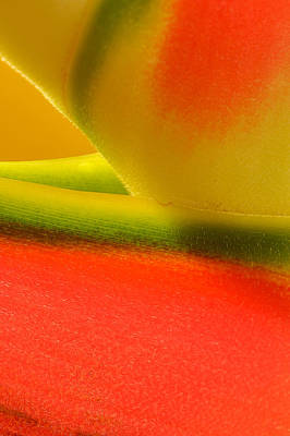 Photograph Of A Lobster Claws Heliconia Art Print