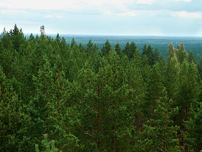 Jouko Lehto Royalty-Free and Rights-Managed Images - Pine forest by Jouko Lehto