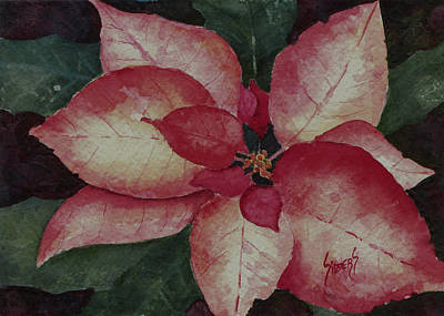 Poinsettia Painting - Poinsettia by Sam Sidders