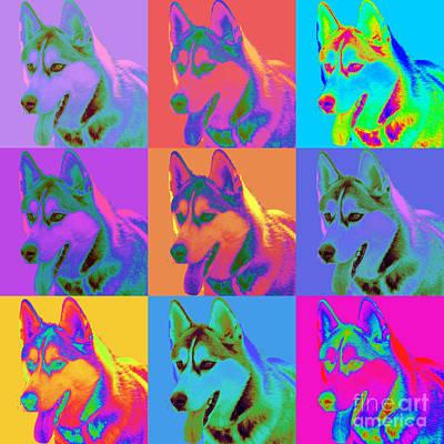 Pop Art Siberian Husky Art Print by Renae Laughner