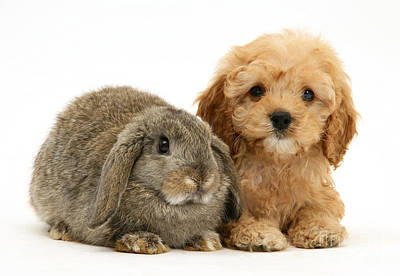 Puppies. Puppy Photograph - Puppy And Rabbit by Mark Taylor