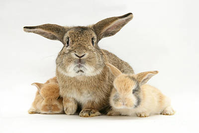 Photograph - Rabbits by Jane Burton