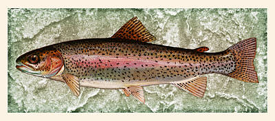 Photograph - Rainbow Trout by John Stephens