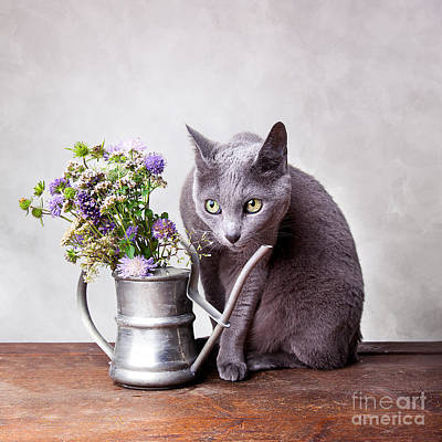 Elegant Cat Photograph - Russian Blue by Nailia Schwarz