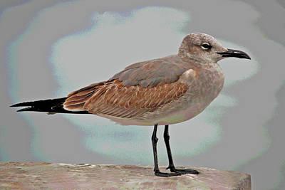 Photograph - 3- Seagull by Joseph Keane