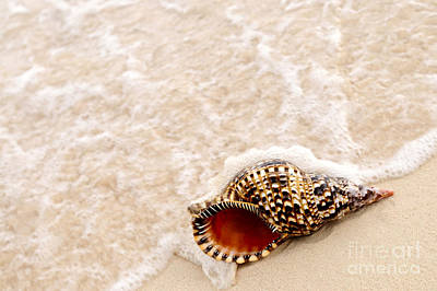 Photograph - Seashell And Ocean Wave by Elena Elisseeva