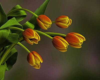Photograph - Six Tulips by Bob Mulligan