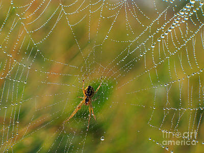 Spiderweb Art Print by Odon Czintos