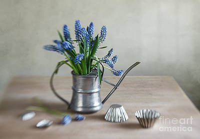 Floral Photograph - Still Life With Grape Hyacinths by Nailia Schwarz