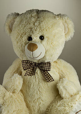 Photograph - Teddy Bear by Blink Images