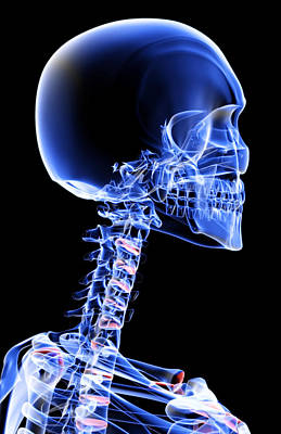 X-ray Image Digital Art - The Bones Of The Head And Neck by MedicalRF.com