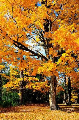 Photograph - Tree Of Gold by Joe  Ng