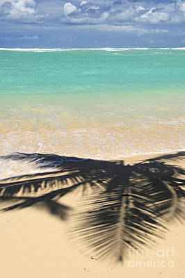 Punta Cana Wall Art - Photograph - Tropical Beach by Elena Elisseeva