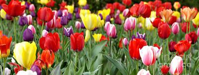 Tulip Garden University Of Pittsburgh  Art Print by Thomas R Fletcher