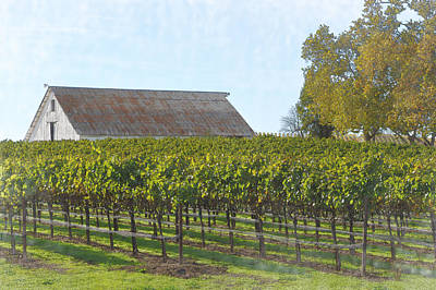Wine Country Digital Art - Vineyard With Old Barn by Brandon Bourdages