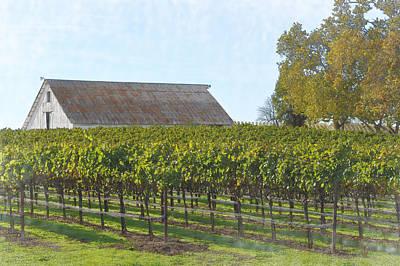 Vineyard With Old Barn Art Print
