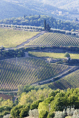 Chianti Vines Photograph - Vineyards And Olive Groves by Jeremy Woodhouse