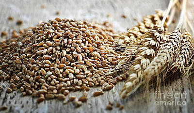 Cereal Photograph - Wheat Ears And Grain by Elena Elisseeva