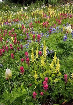 Wildflower Meadow Art Print by Bob Gibbons