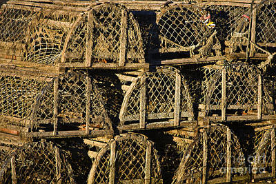 Food And Flowers Still Life Rights Managed Images - Wooden Lobster Traps Royalty-Free Image by John Greim