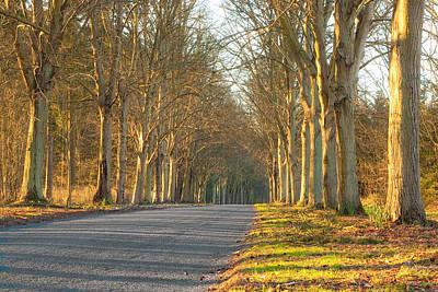 Asphalt Photograph - Woodland by Tom Gowanlock