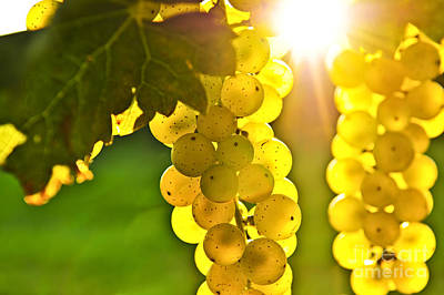 Chardonnay Photograph - Yellow Grapes by Elena Elisseeva