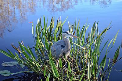 Photograph - 30- Great Blue Heron by Joseph Keane