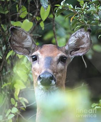 Photograph - White-tailed Deer by Jack R Brock