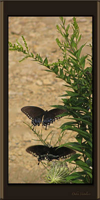 Photograph - Butterfly Collection by Debra     Vatalaro