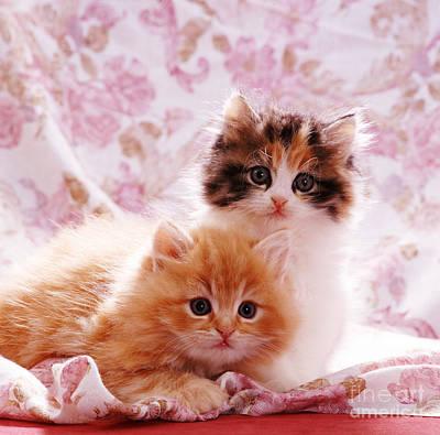 Animal Portraiture Photograph - Kittens by Jane Burton