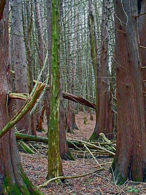 Photograph - Willow Pond B And B by Cyryn Fyrcyd