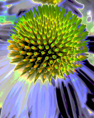 Abstracted Coneflowers Digital Art - Coneflower by Michele Caporaso