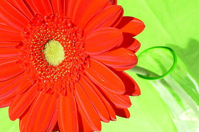 Food And Flowers Still Life - 3998-002 by Kimberlie Gerner Wells