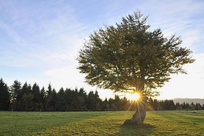 Y120817 Photograph - Beech Tree, Schauinsland, Black Forest, Baden-wurttemberg, Germany by Raimund Linke