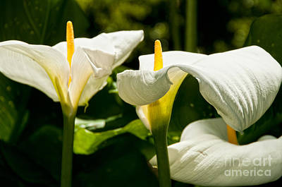 Digital Art - Botanical Gardens by Carol Ailles