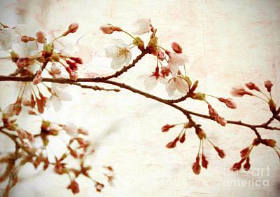 Cherry Blossoms Art Print by Charline Xia