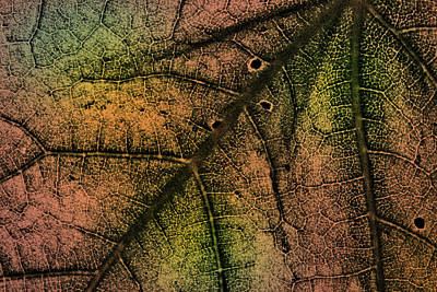 Photograph - Colored Leaf Closeup by  Onyonet  Photo Studios