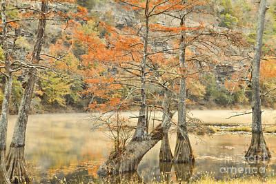 Cypress Trees In The Mist Art Print by Iris Greenwell
