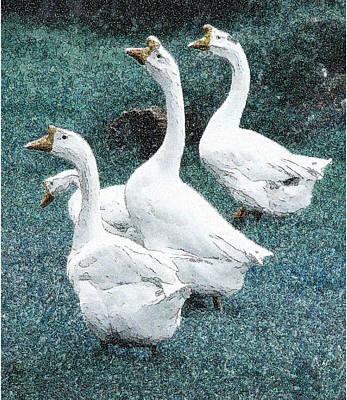 4 Ducks Art Print