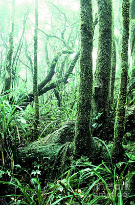 Verdant Digital Art - El Yunque National Forest by Thomas R Fletcher