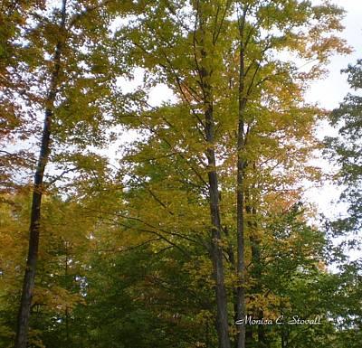 Fall Colors Collection - Michigan Art Print