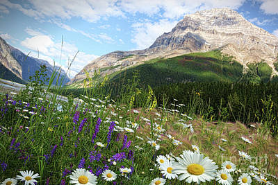 Photograph - Field Of Daisies And Wild Flowers by Sandra Cunningham