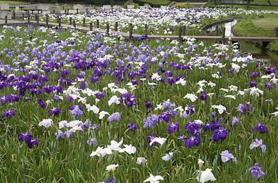 Photograph - Flower Garden by Masami Iida