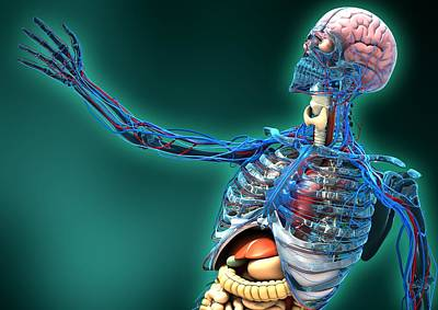 Human Anatomy, Artwork Art Print by Carl Goodman