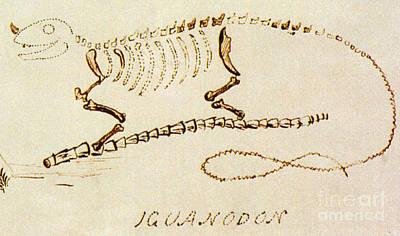 Iguanodon, Mesozoic Dinosaur Art Print by Science Source